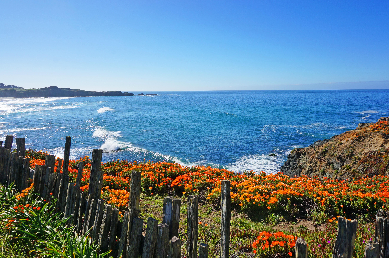 Black-Point-Beach-Sea-Ranch