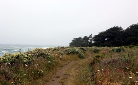 Bluff Top Trail in Gualala Point